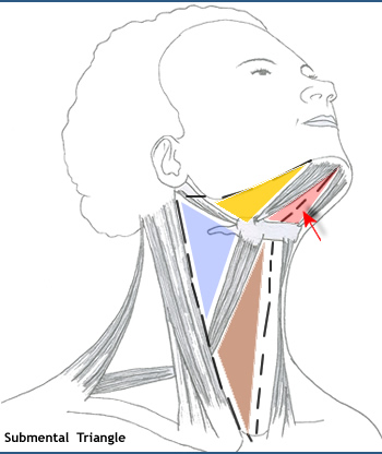anterior cervical triangle